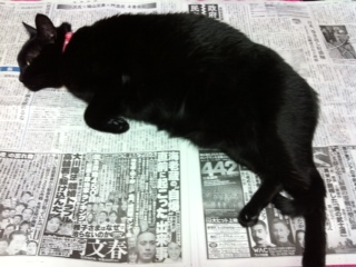 姉さん猫ルナ