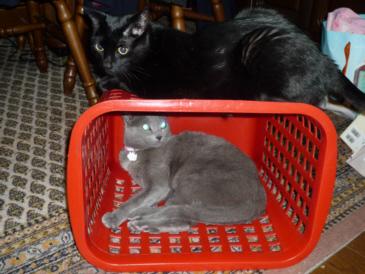 箱入り娘?母猫カナ