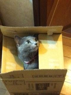 【猫】箱入り娘?
