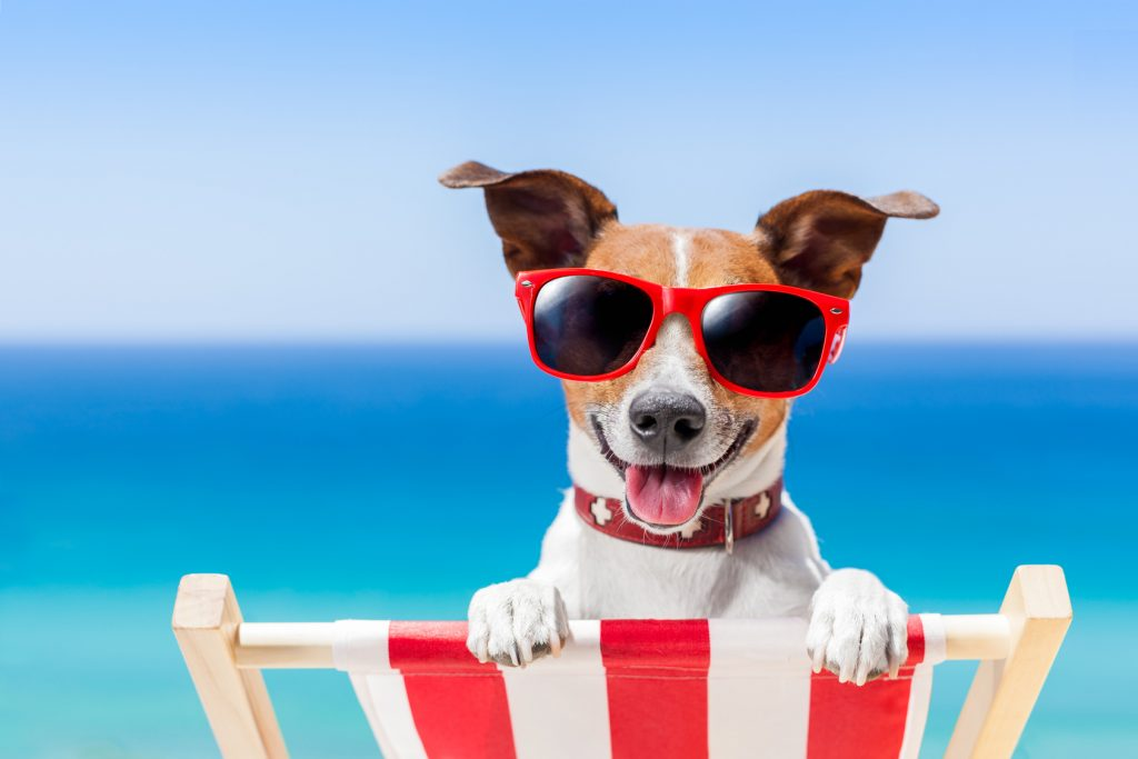 dog relaxing on a fancy deck chair